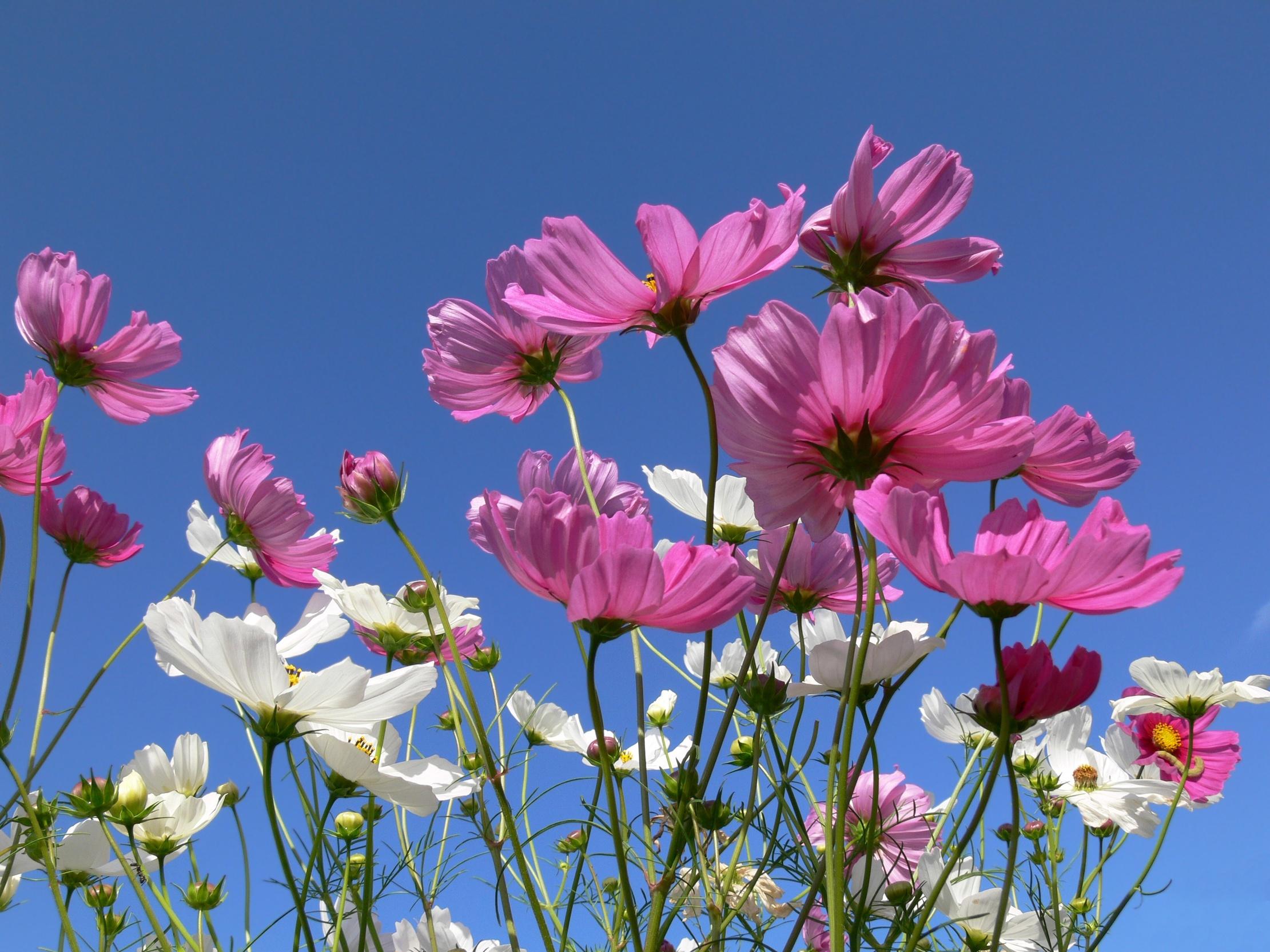 Vous êtes sujet au rhume des foins (allergique au pollen ou graminées) ?